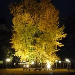 第15回大公孫樹祭オープニング