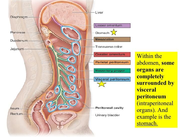21-digestive-system-1-48-728.jpg