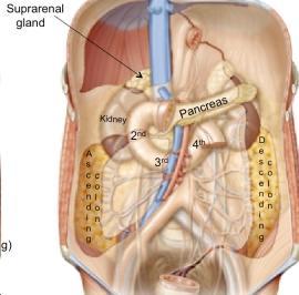 retroperitoneal_organs-141F685FAAF101A06BF.jpg