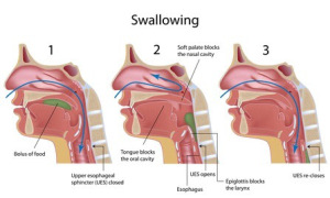 swallowing.png
