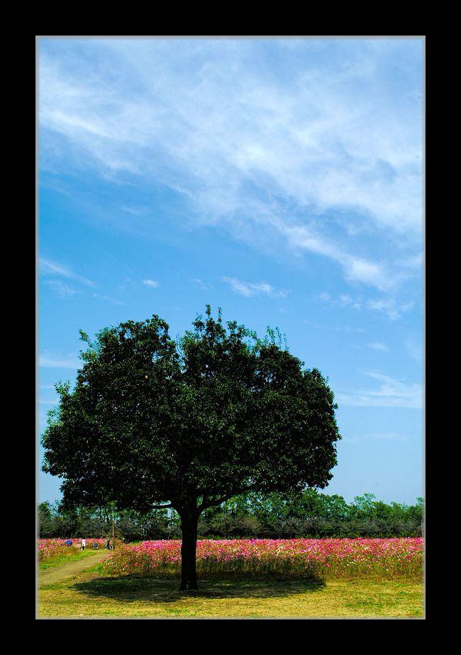 この~木なんの木