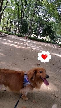 犬太郎の笑顔