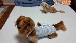 お洋服犬太郎