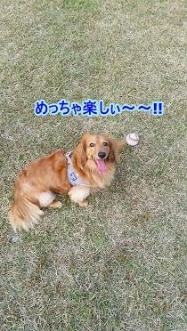 楽しい犬太郎