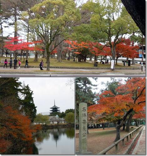 12.12.2奈良公園