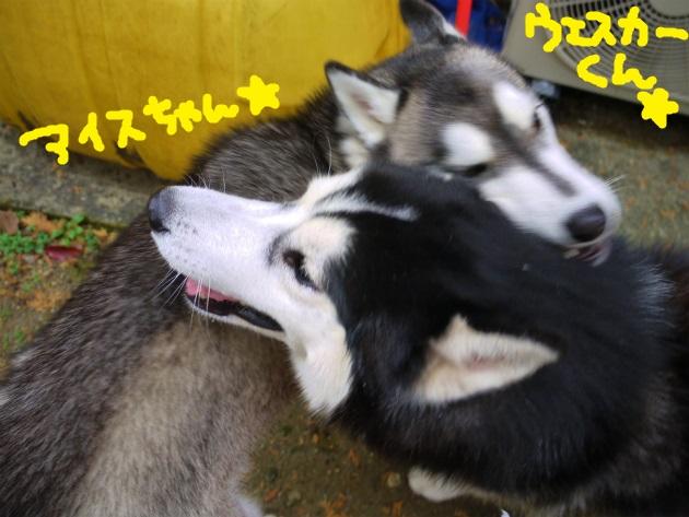 P1810512.jpg