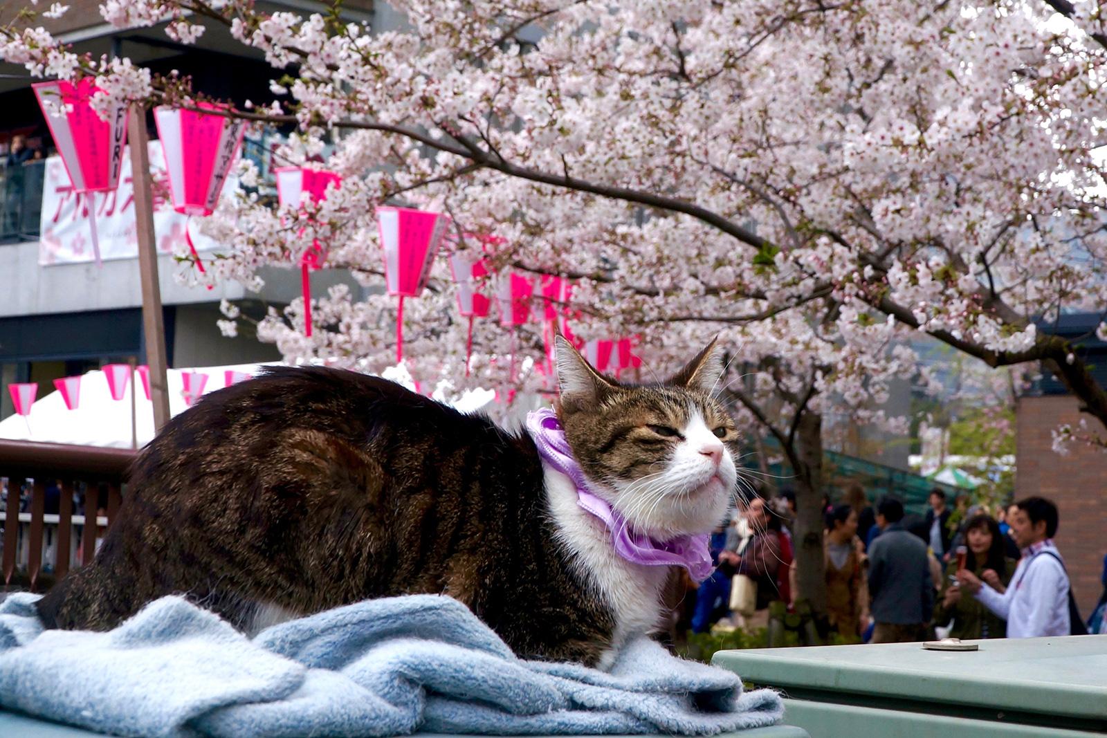 中目黒 桜まつり6