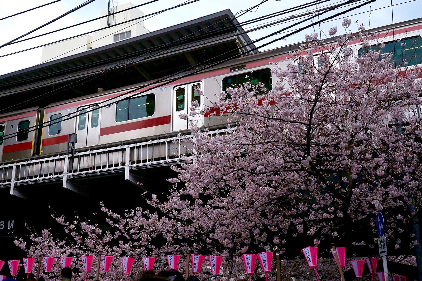中目黒 桜まつり4