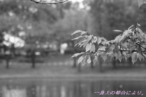 IMG_0379御伊勢塚公園3