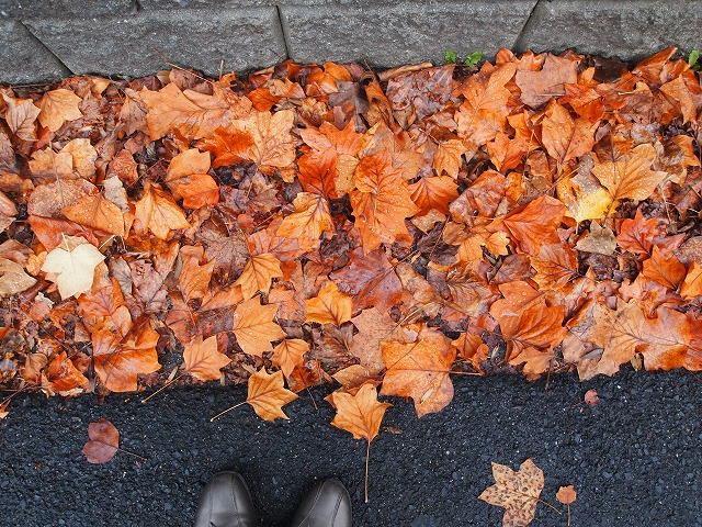 s-秋の落ち葉*