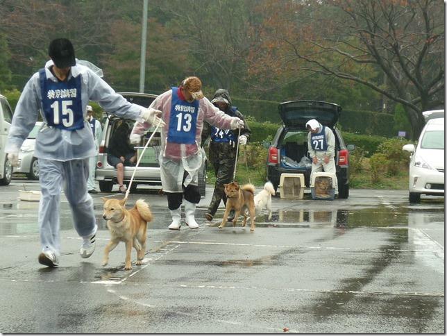 201511NKC三重支部チャンピオン展04-04