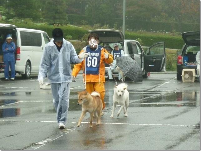 201511NKC三重支部チャンピオン展06-07