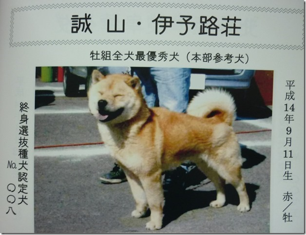 201511NKC愛犬写真集-02