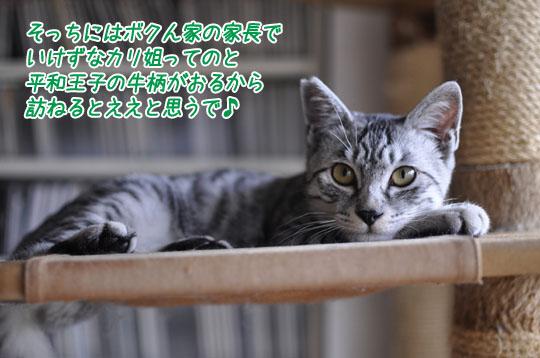 151112_luck.jpg