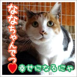 banner_nana_kettei.jpg