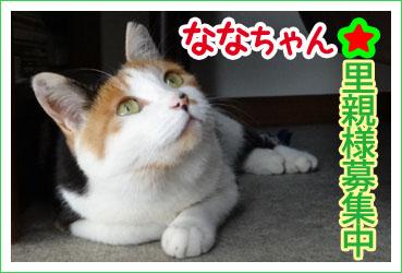 banner_nana_yokoKoduka.jpg