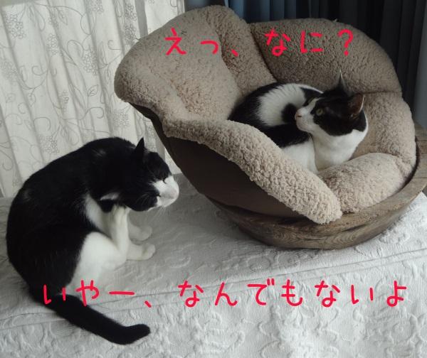 DSC06204_20151031211650d72.jpg