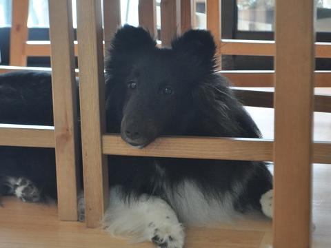 小熊ちゃん2