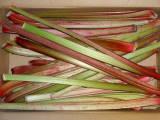 greenrhubarbs2.jpg