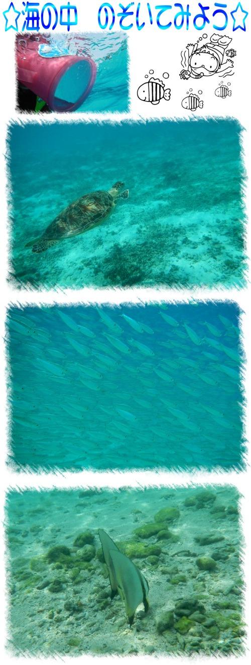 海の中 のぞいてみよう