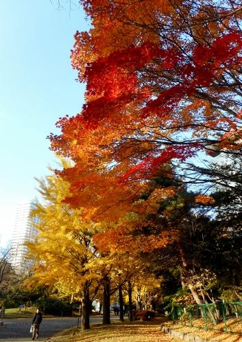 中島公園 2015秋 紅葉