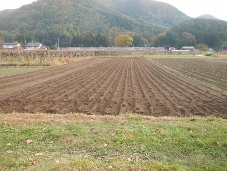 麦の播種作業 (4)