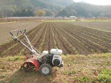麦の播種作業 (2)