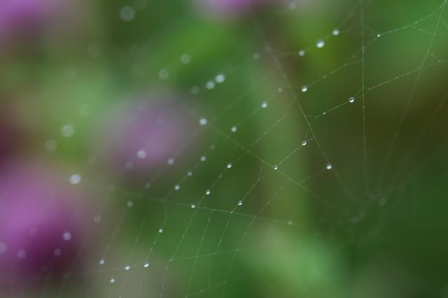 センニチコウと蜘蛛の巣-01