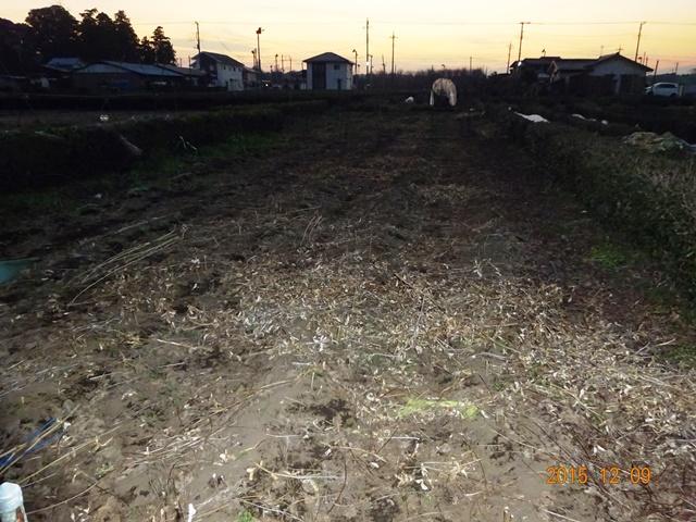 収穫の終わった大豆畑