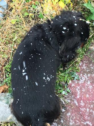 20151120 犬の上に雪