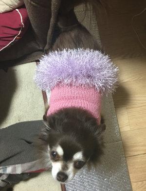 20151130 犬のセーター ダイソー リュミエール