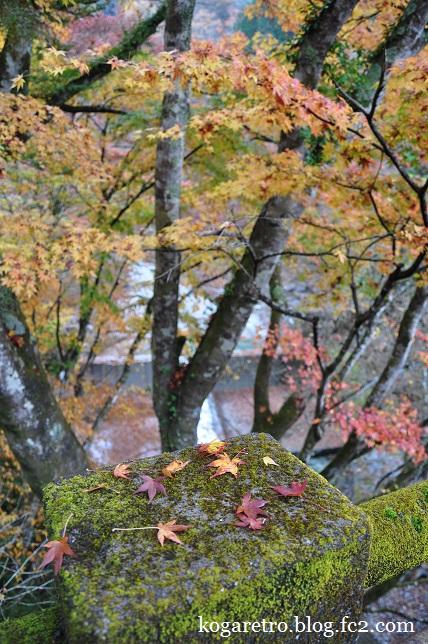 大芦渓谷の紅葉4