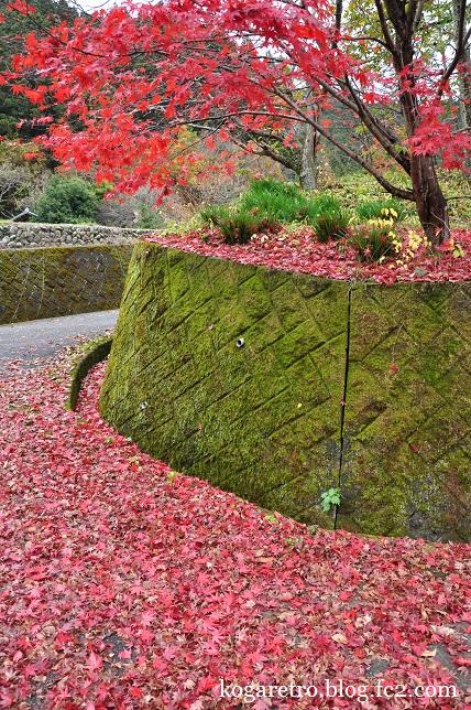 大芦渓谷の紅葉6