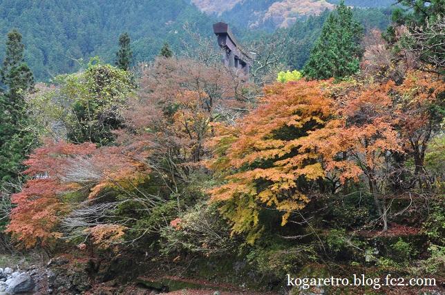 大芦渓谷の紅葉8