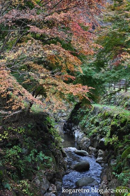 出流ふれあいの森の冬桜6