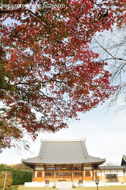 満福寺の冬桜