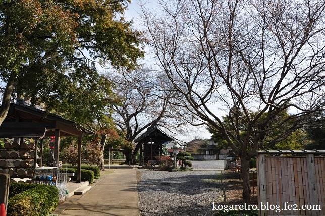 満福寺の冬桜2