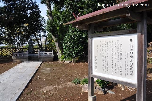 満福寺の冬桜6