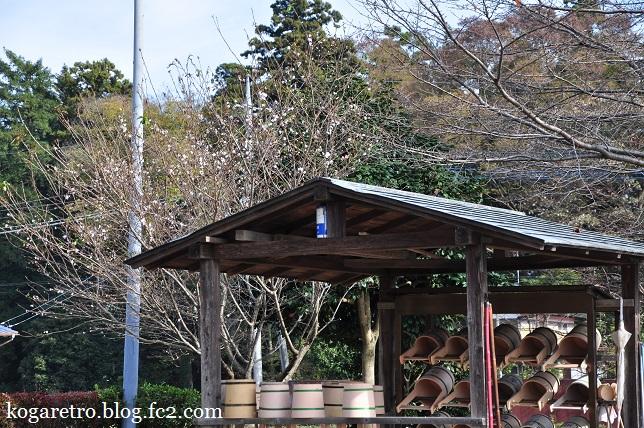 満福寺の冬桜3