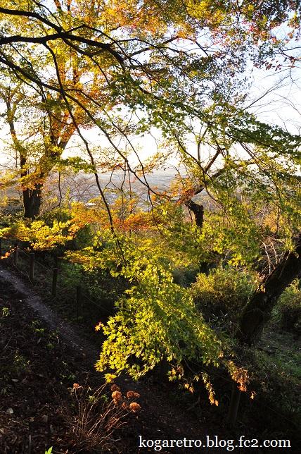 2015太平山の朝日と紅葉4