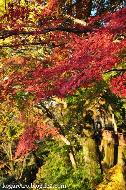 2015太平山の朝日と紅葉5