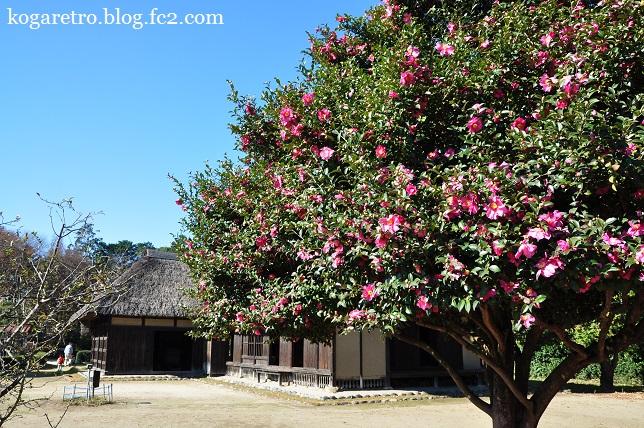 秋の古河総合公園