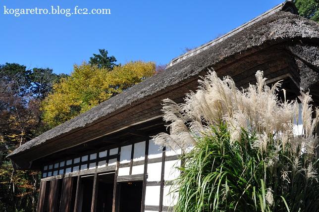 秋の古河総合公園2