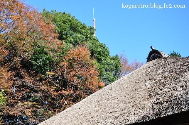 秋の古河総合公園3