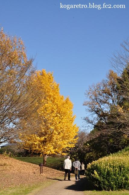 秋の古河総合公園5