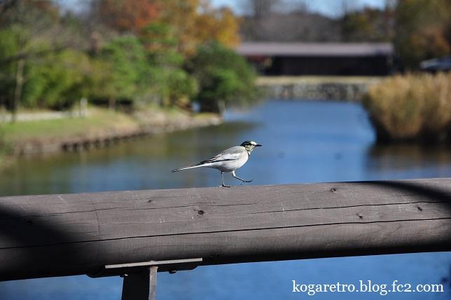 秋の古河総合公園7