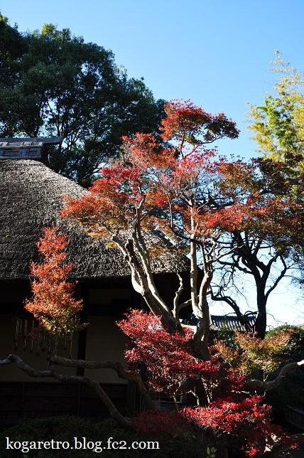秋の鷹見泉石記念館2