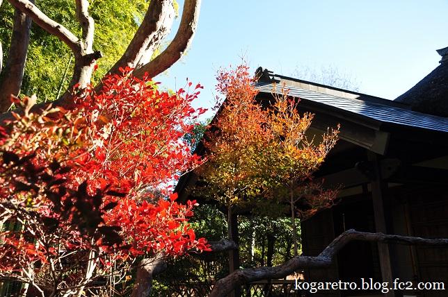 秋の鷹見泉石記念館3