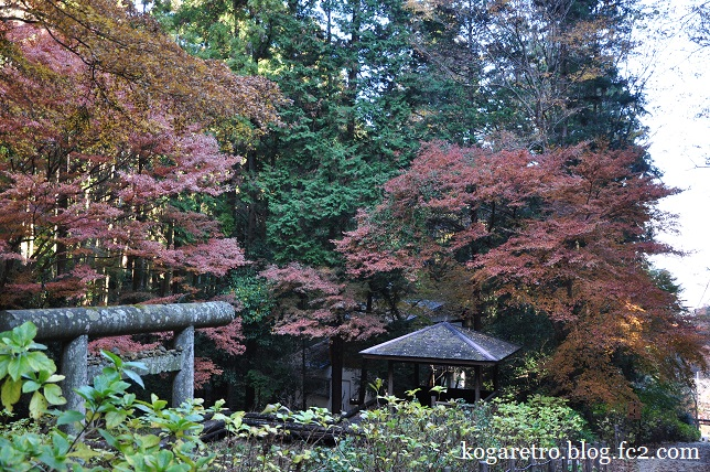 太平山の紅葉2