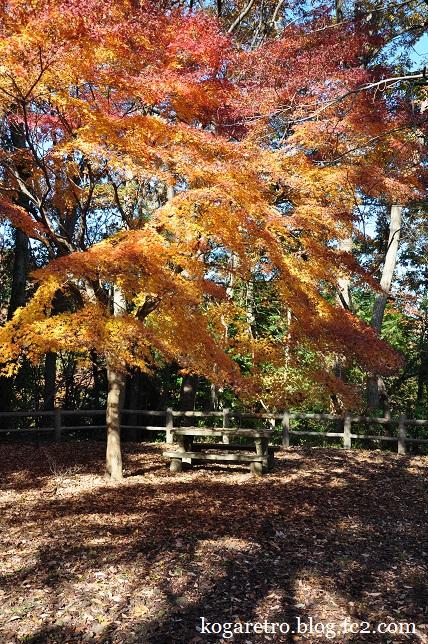 太平山の紅葉6